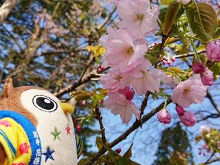 20180428_桜④.jpg