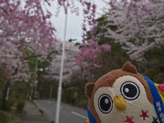 20180425_桜⑤.jpg
