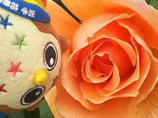 20180414_Hanamakionsen_RoseGarden4.jpg