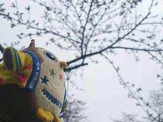 20180414_Hanamakionsen_sakura1.jpg