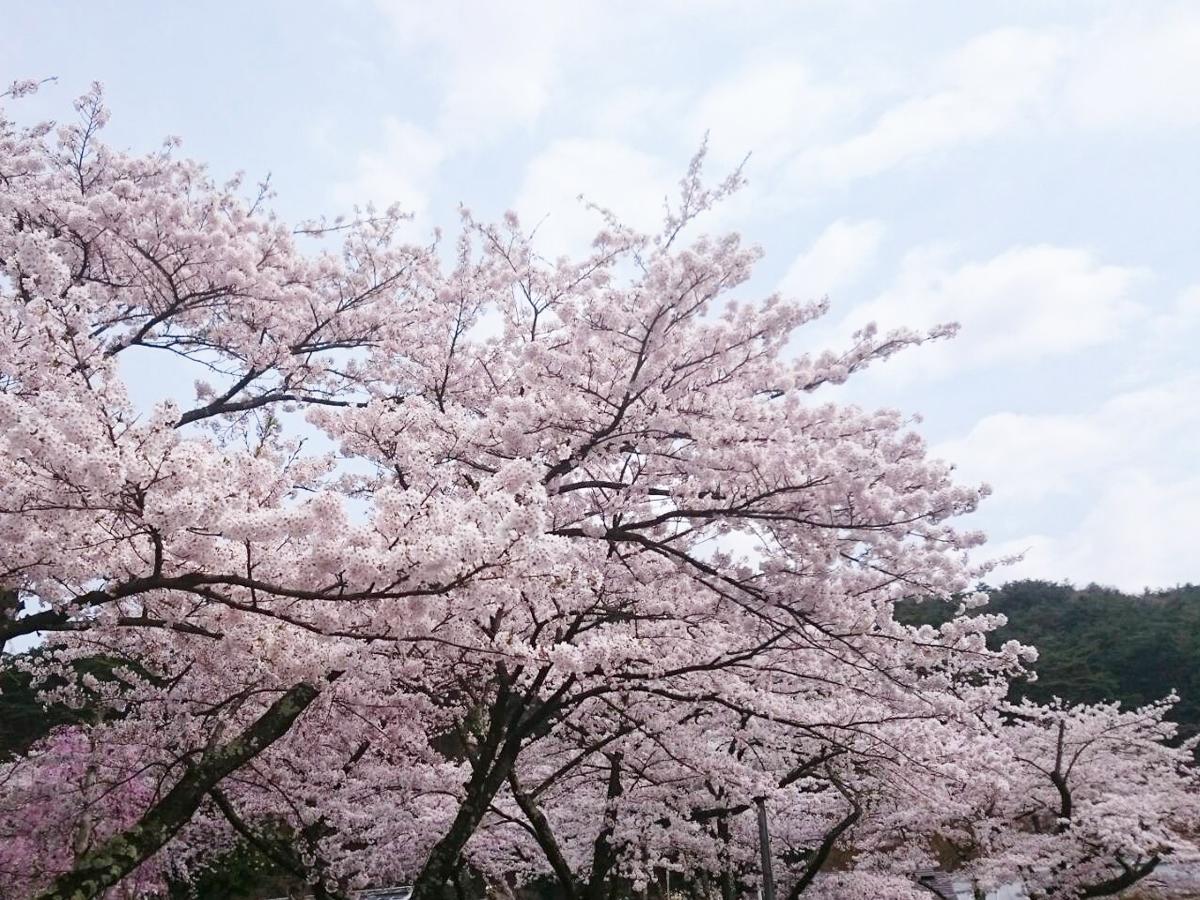 20170429_桜�B.jpg