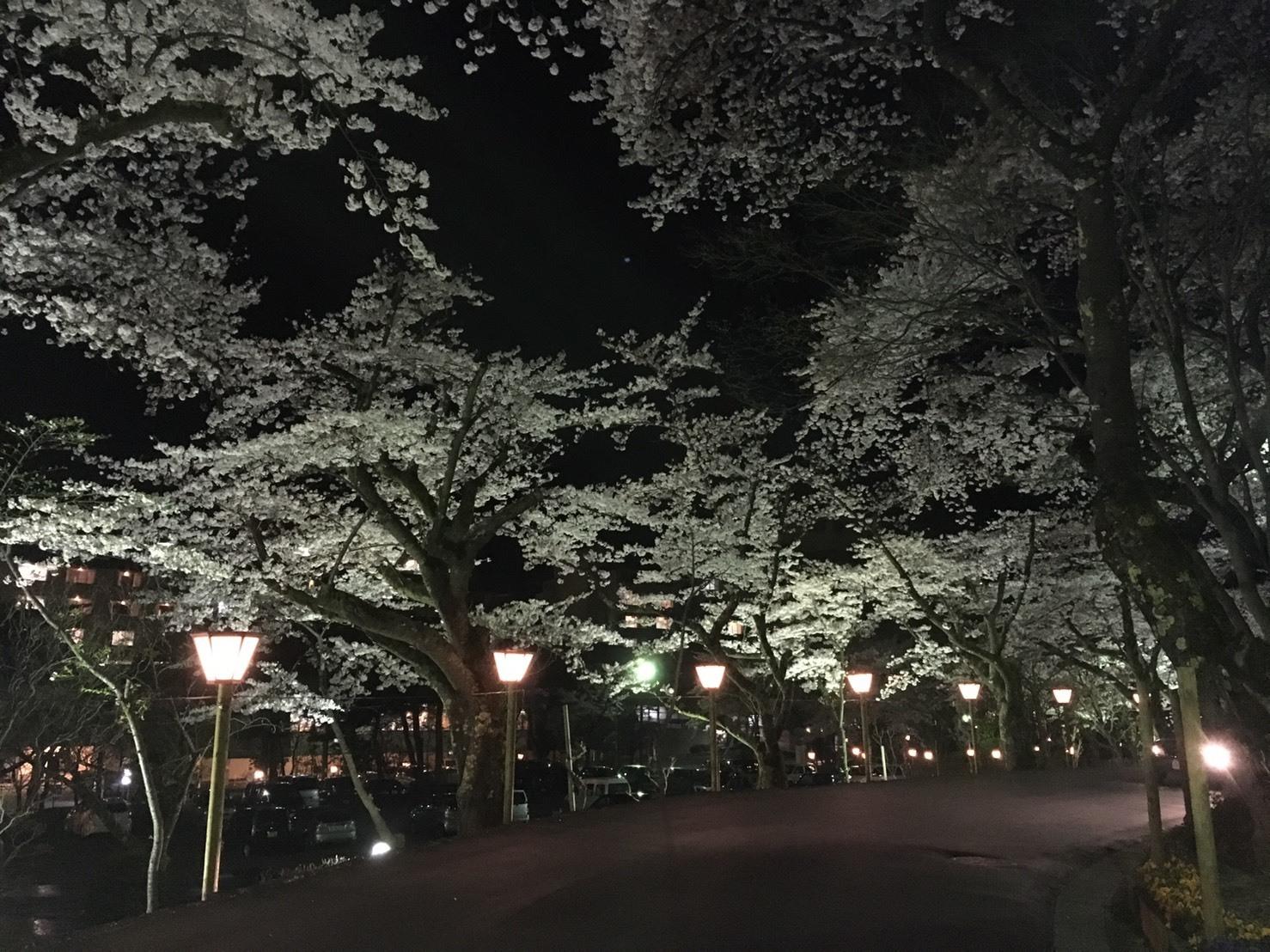 20160423_夜桜.jpg