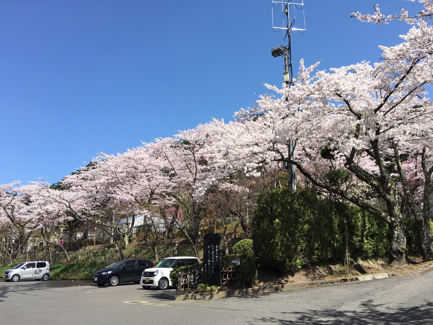 20160424_桜4.jpg