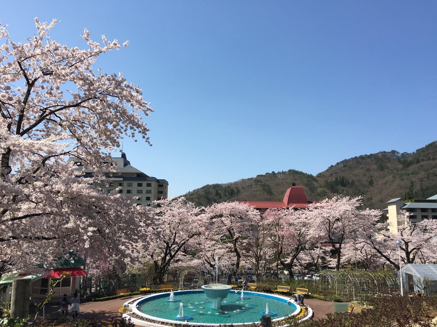 20160424_桜3.jpg