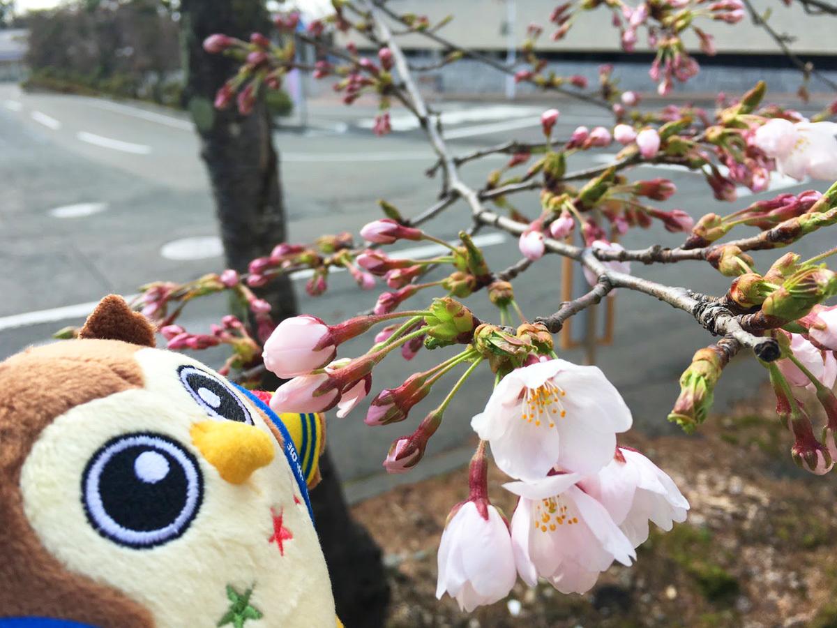20170420_フクローと桜.jpg