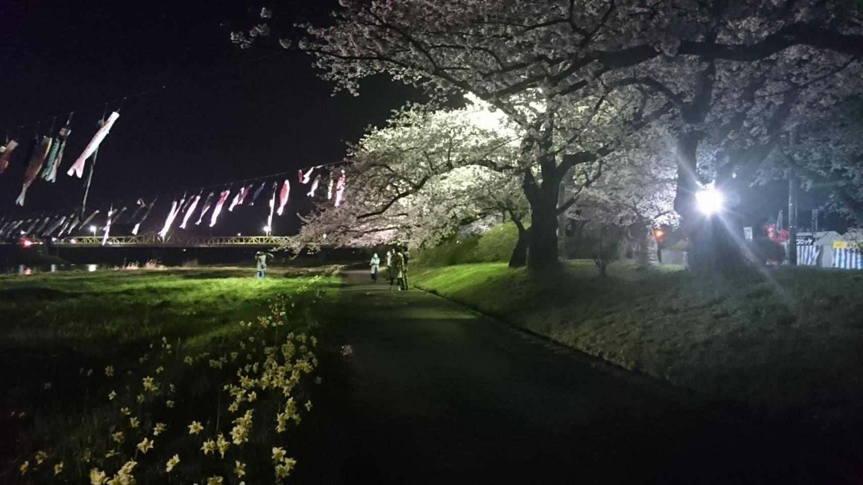 20170421_展勝地の夜桜�@.jpg