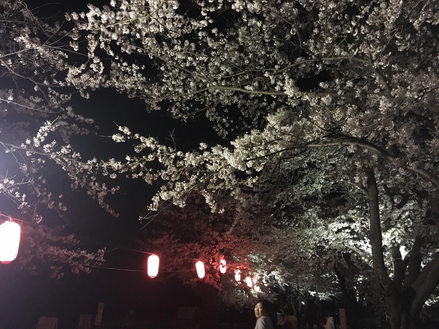 20170426_展勝地の夜桜�@.jpg