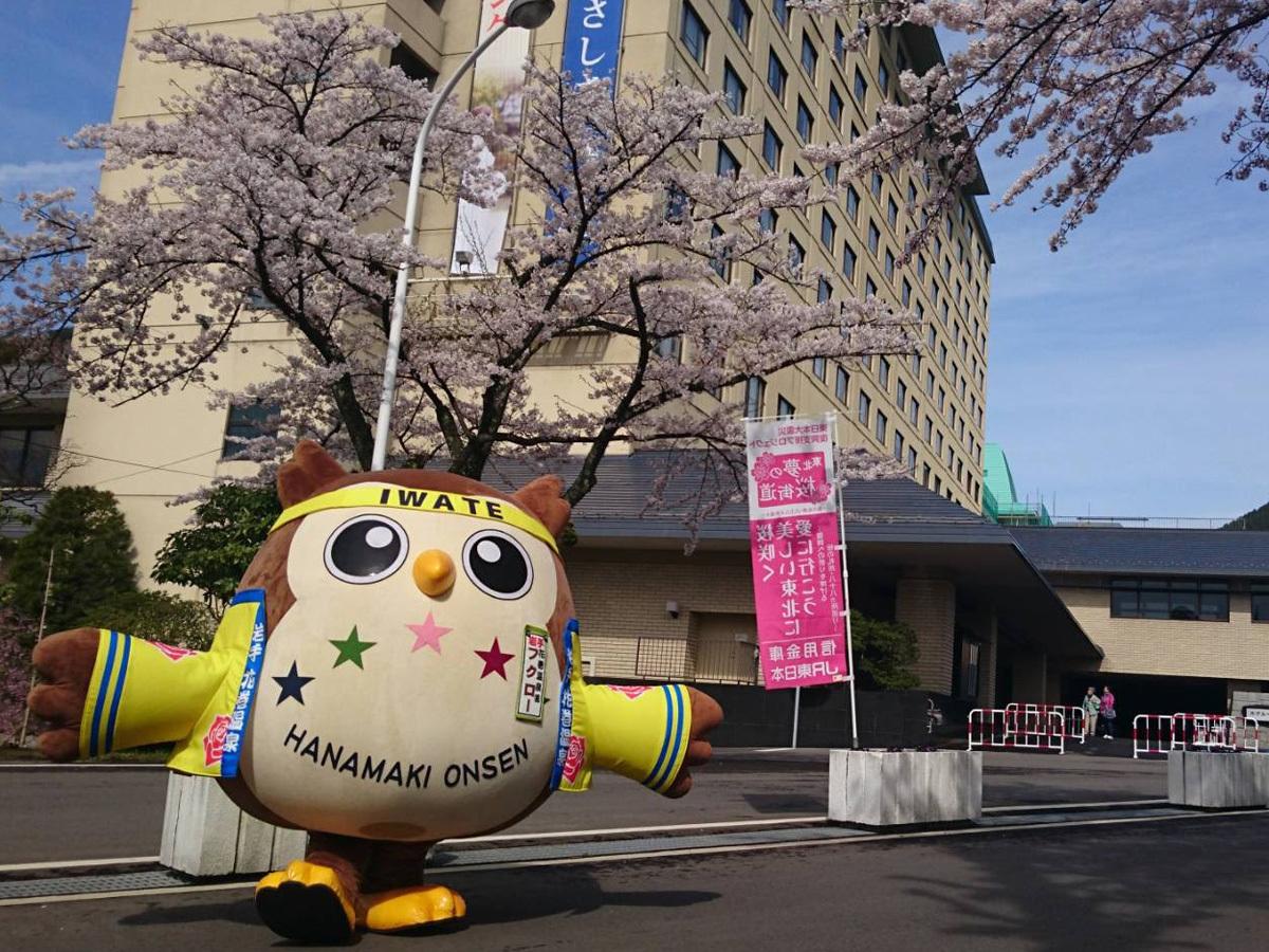 20170427_桜とフクロー�A.jpg