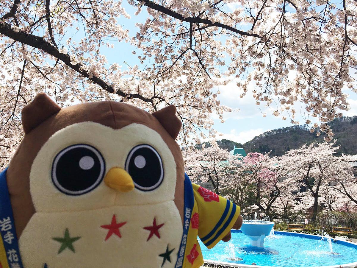 20170427_桜とフクロー.jpg