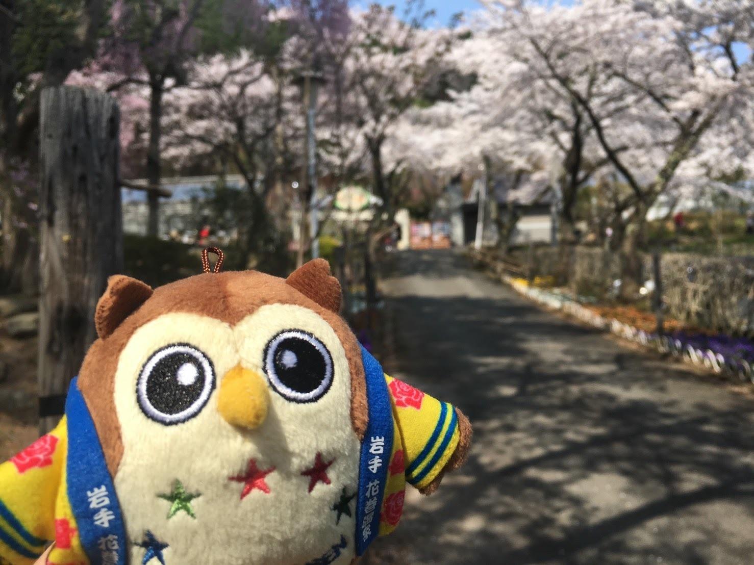 20170430_桜とフクロー�A.jpg