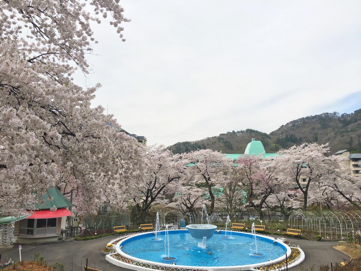 20170501_バラ園の桜.jpg