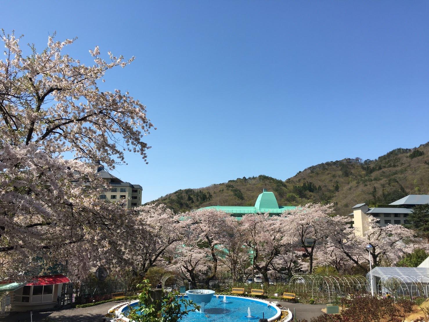 20170503_桜�A.jpg