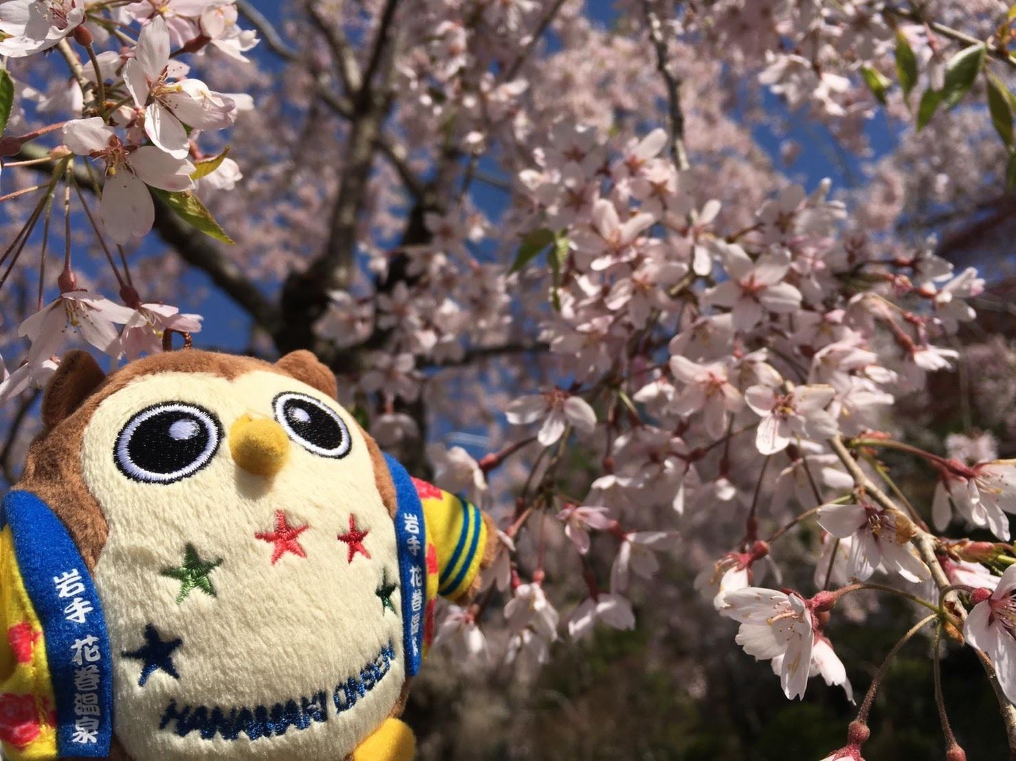 20170503_桜とフクロー�A.jpg