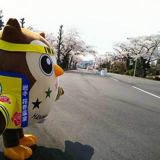 20170429_HanamakiOnsen Sakura5.jpg