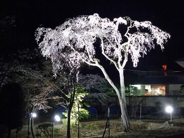 20160421_夜桜.jpg