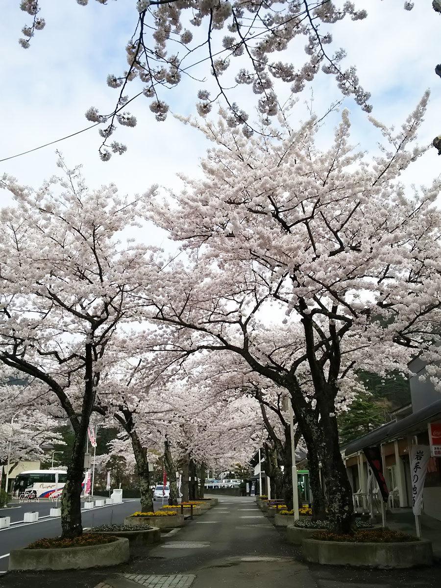 20160422_桜2.jpg