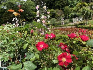 20180531_Hanamakionsen Rose Garden3.jpg