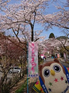20180422_桜�A.jpg