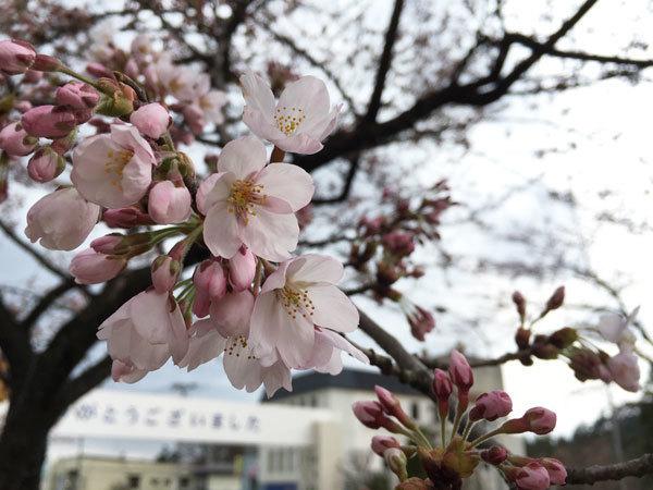 20160418_桜1.jpg