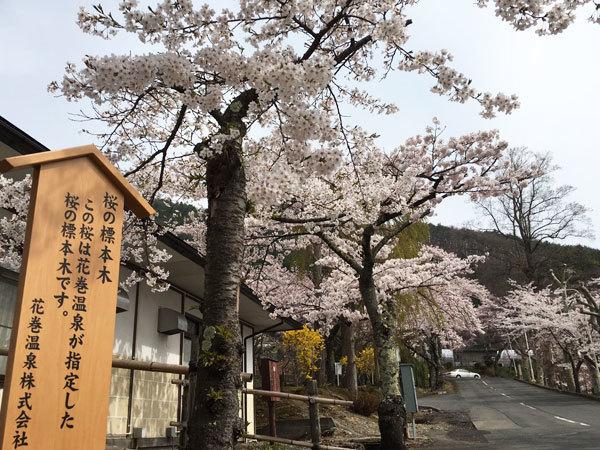 20160421_桜2.jpg