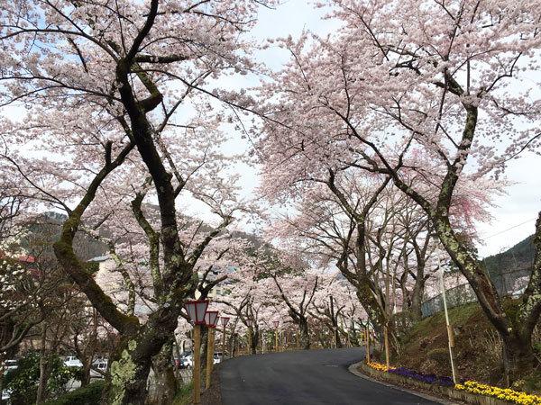 20160422_桜4.jpg