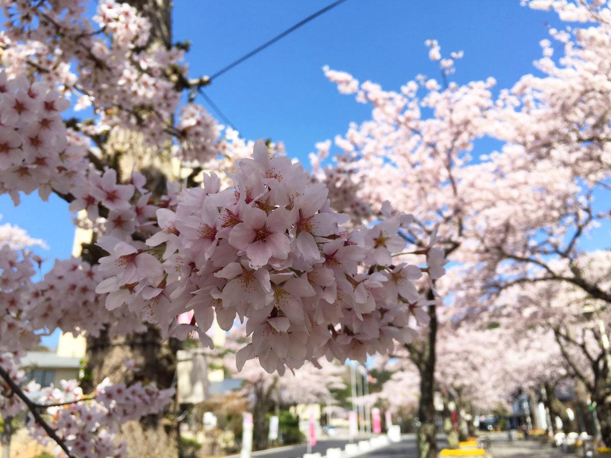 20160424_桜2.jpg