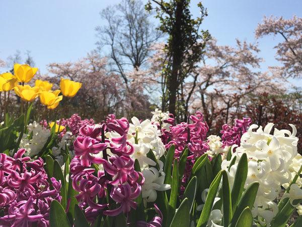 20160425_春の花2.jpg